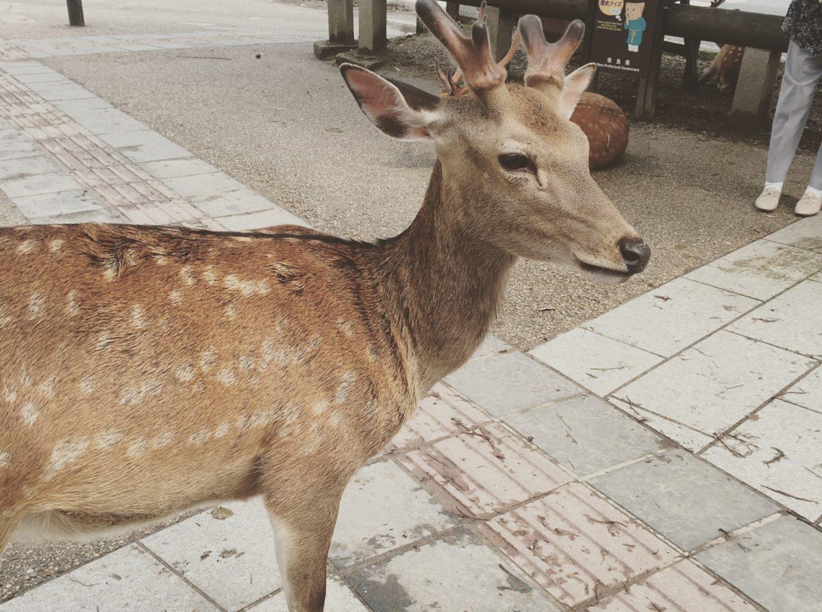 Deer-2020